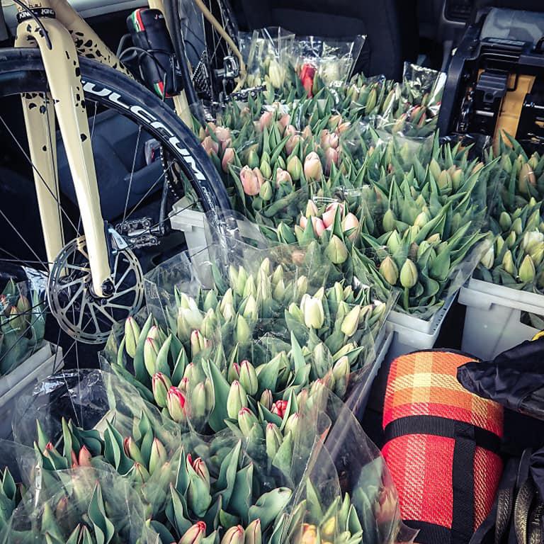 Bici e tulipani